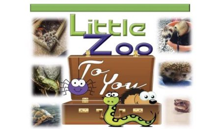 Little Zoo to You