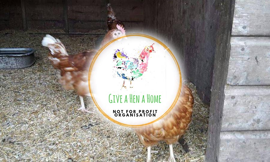 Give a Hen a Home