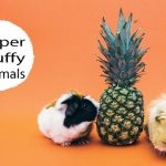 Super Fluffy Animals